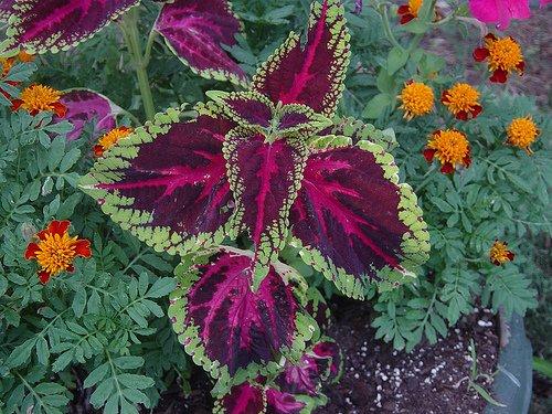 Árnyékos kerti növények