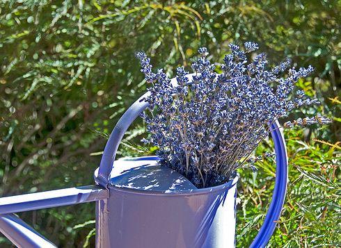 Kertészanyu:5 fantasztikus levendulás dekoráció otthonra!