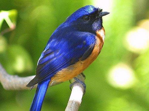 Kertészanyu: Könyvajánló madár és kertbarátok számára