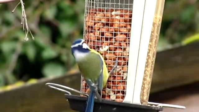 Kertészanyu:Így etessük a madarakat télen
