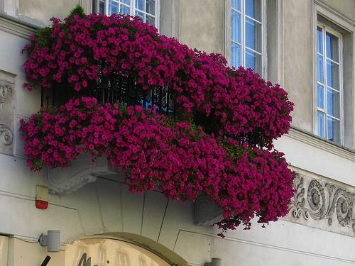 Kertészanyu: Így tervezz balkonkertet az erkélyen